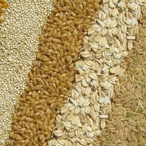 Grains / cereals
